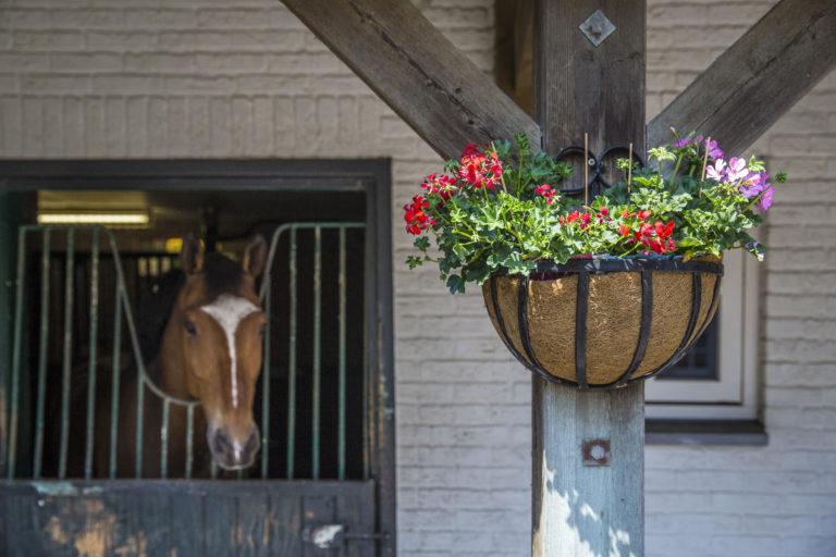Paardenhouderij accommodatie - De Hippische Ondernemer