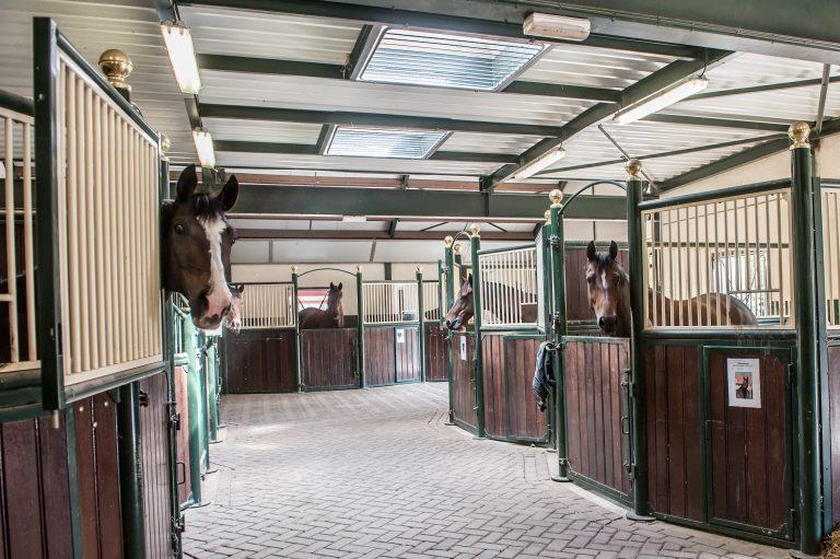manege paardenbedrijf De Hippische Ondernemer
