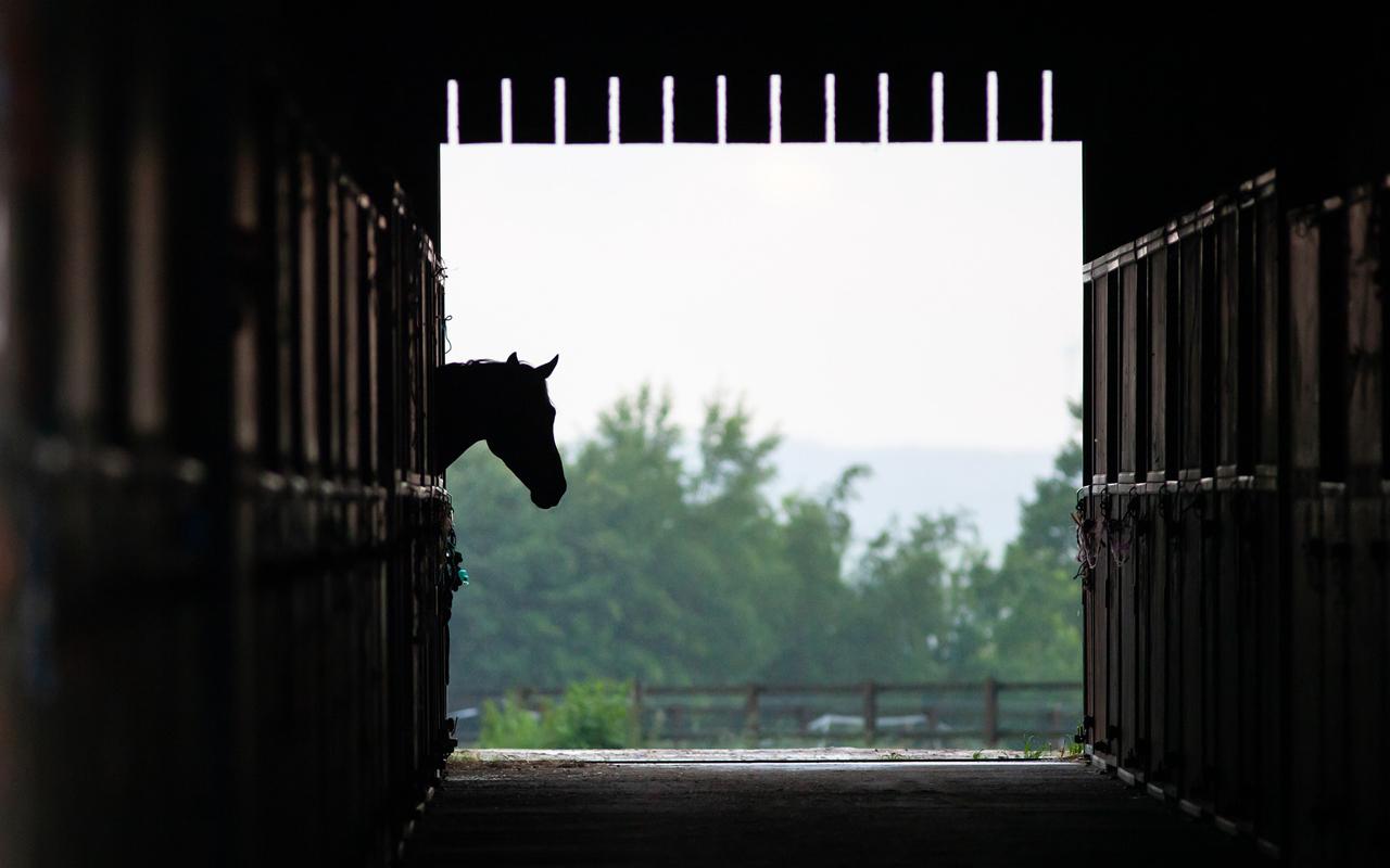 stal paard paardenstal
