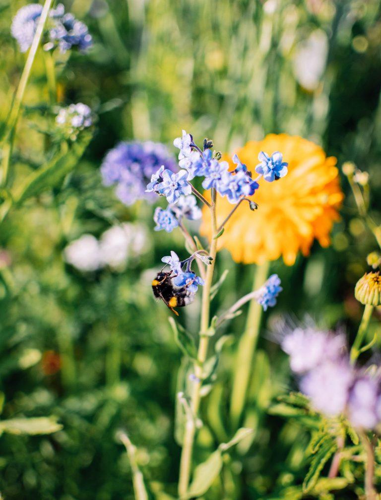 akkerrand biodiversiteit bloemen kruiden groenstrook