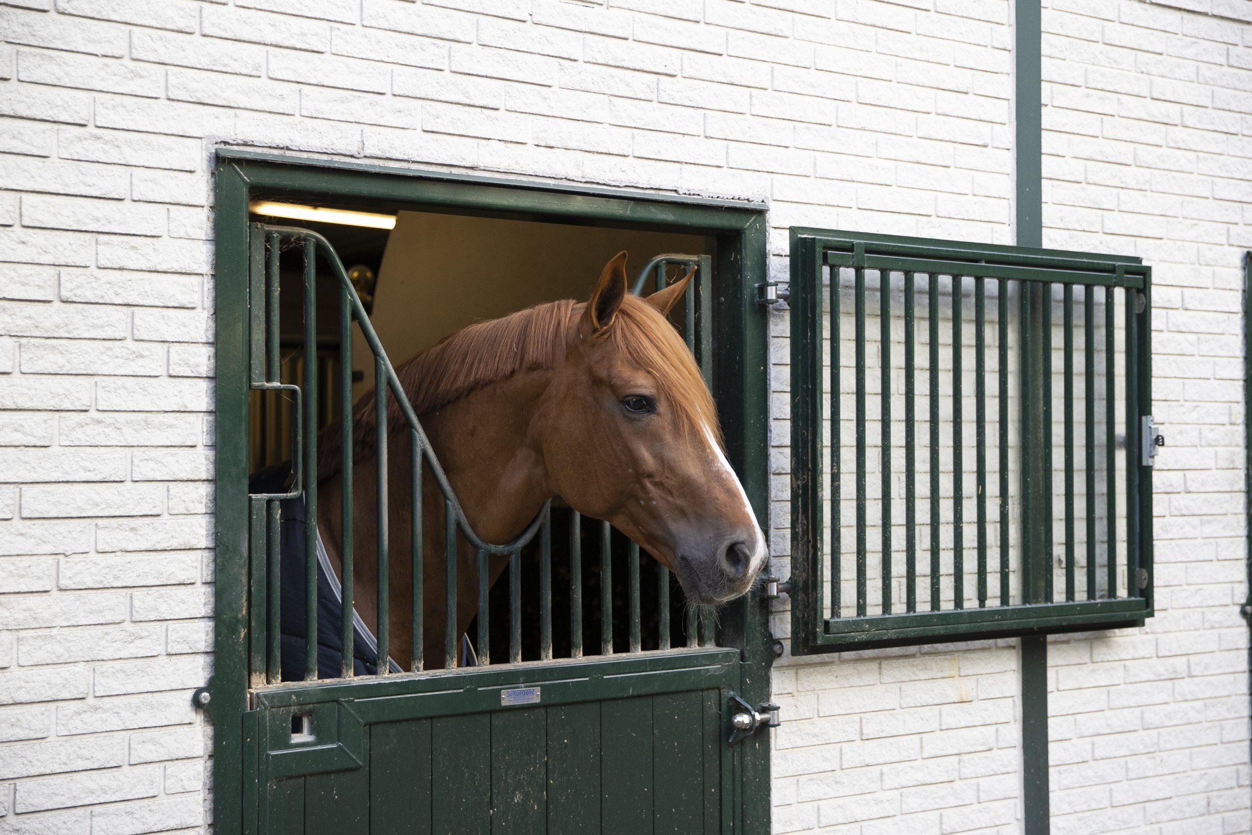 paard paardenbedrijf hippische bedrijf